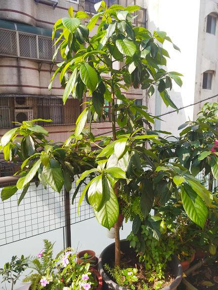 老爺爺的開心花園 6.jpg