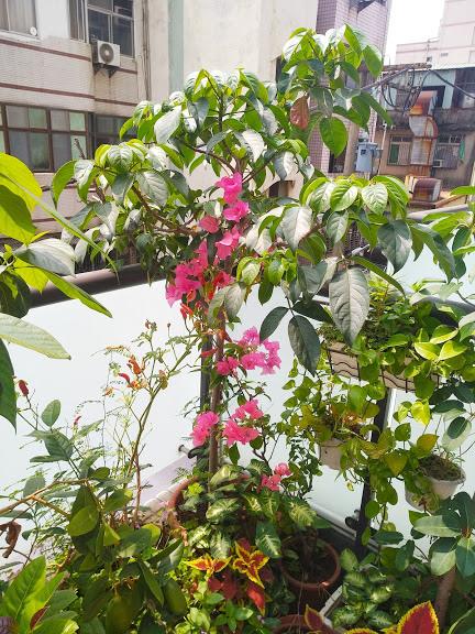 老爺爺的開心花園 15.jpg