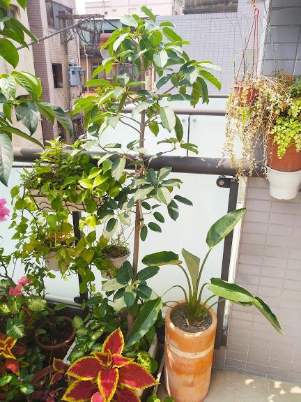 老爺爺的開心花園 14.jpg