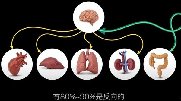 腸道第二大腦.jpg