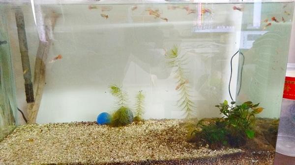 小魚缸.jpg