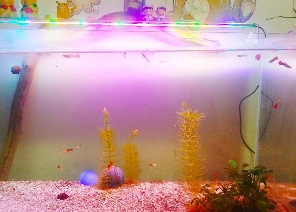 地震魚缸.jpg