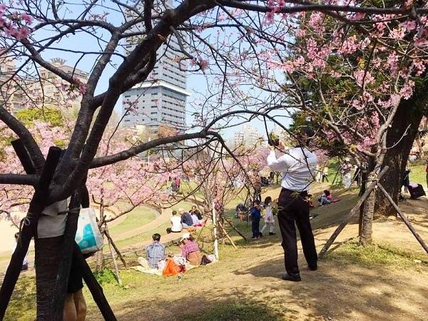 新竹公園櫻花 1.jpg