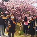 新竹公園櫻花 12.jpg
