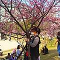 新竹公園櫻花 14.jpg