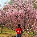 新竹公園櫻花 8.jpg