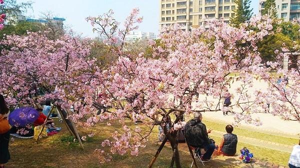新竹公園櫻花 16.jpg