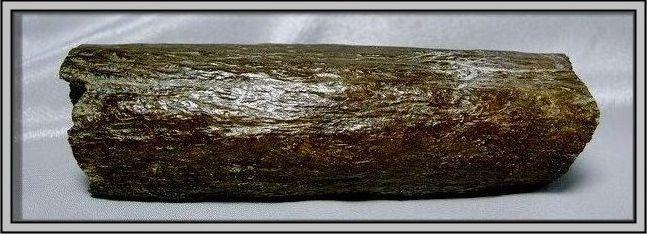 3.石頭ㄚm大象化石