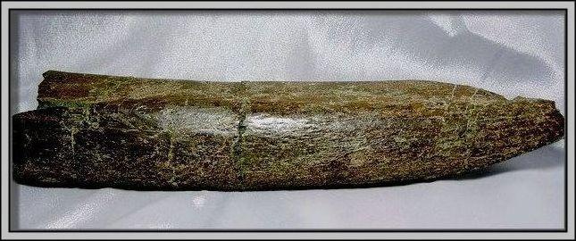 5.石頭ㄚm大象化石