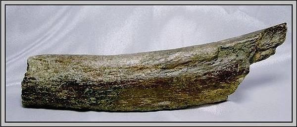 9.石頭ㄚm 大象化石