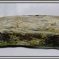 10.石頭ㄚm 大象化石