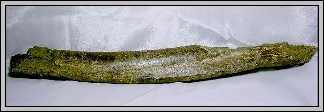 14.石頭ㄚm 大象化石