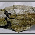 20.石頭ㄚm 大象化石