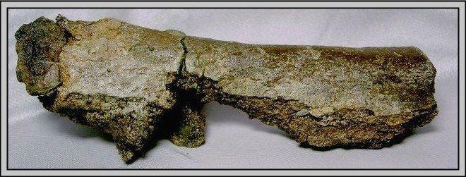 22.石頭ㄚm 大象化石