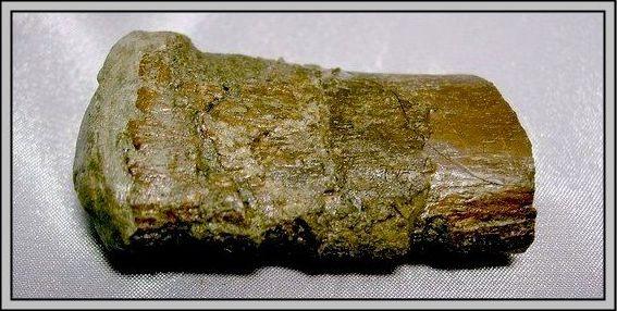 23.石頭ㄚm 大象化石