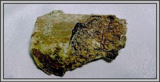 26.石頭ㄚm 大象化石