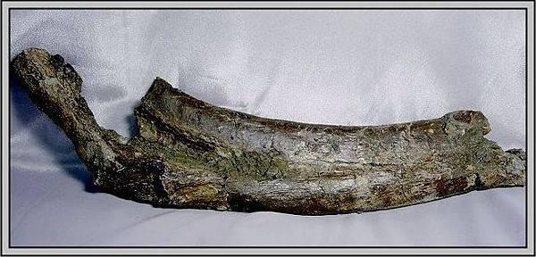 27.石頭ㄚm 大象化石