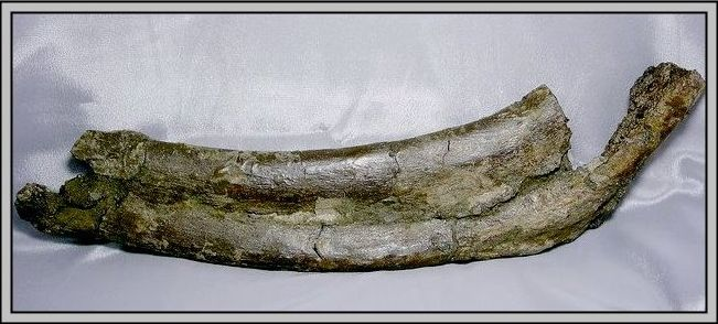 28.石頭ㄚm 大象化石