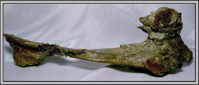 30.石頭ㄚm 大象化石