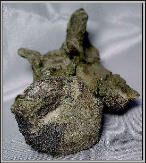 34.石頭ㄚm大象化石