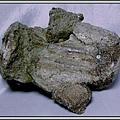 35.石頭ㄚm大象化石