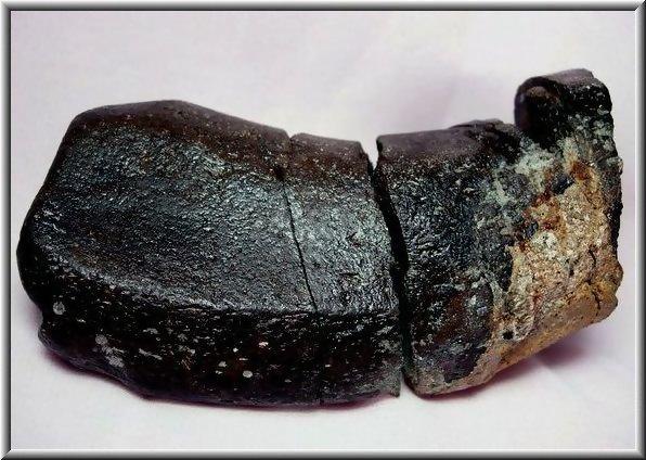 4.【化石名稱:鯨魚肋骨】