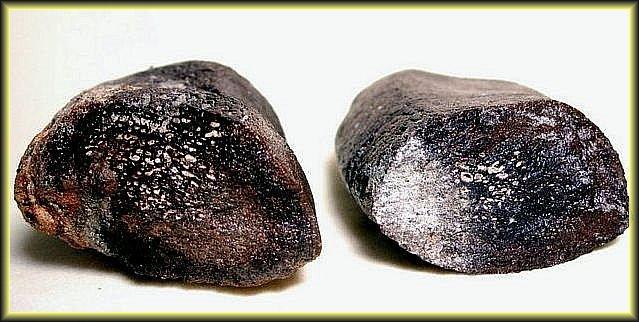 7.7.【化石名稱:鯨魚肋骨骨頭結構】