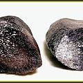 7.【化石名稱:鯨魚肋骨骨頭結構】