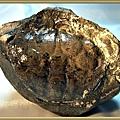 風情萬種~螃蟹化石NO.2