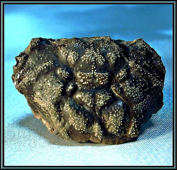 風情萬種 ~ 螃蟹化石NO.8