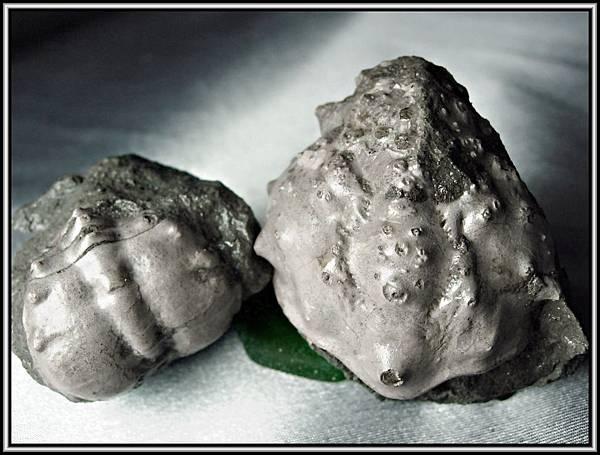 風情萬種 ~ 螃蟹化石NO.9