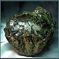 風情萬種 ~ 螃蟹化石NO.11