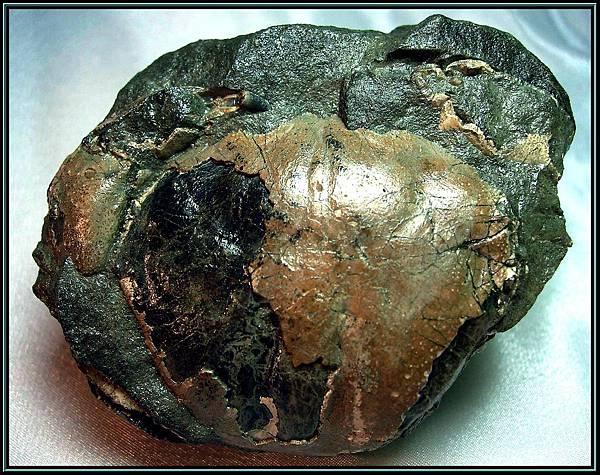 風情萬種 ~ 螃蟹化石NO.13