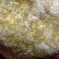 珊瑚化石G9643.jpg