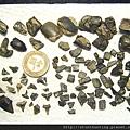 s10808_魚牙化石.jpg
