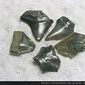 s10820_鯊魚牙化石.jpg