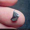 s10827_鯊魚牙化石.jpg