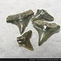 s10830_鯊魚牙化石.jpg