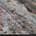 木化石G13845.jpg