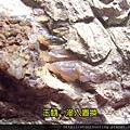 大溪木化G15545.jpg