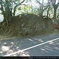 鶯歌神龜石G16426.jpg