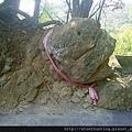 鶯歌神龜石G16428.jpg