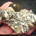 台南關仔嶺化石G17786.jpg