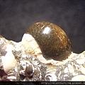 台南關仔嶺化石G17789.jpg