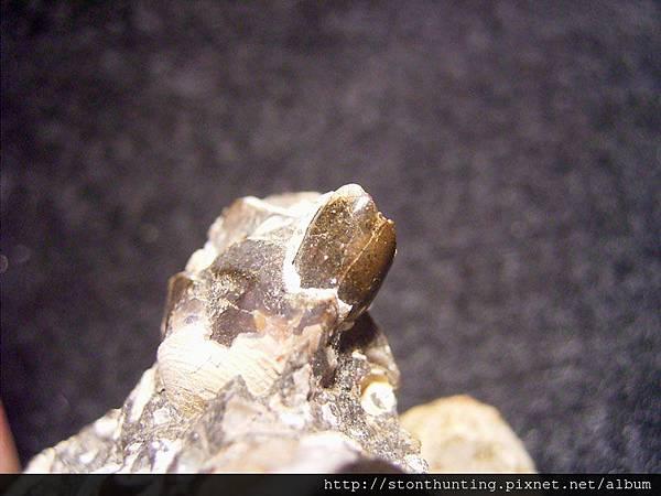 台南關仔嶺化石G17806.jpg