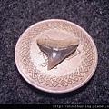 牛埔-鯊魚牙化石G18722.jpg