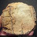 三民植物化石G20863.jpg