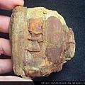 三民植物化石G20873.jpg