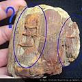 三民植物化石G20874.jpg
