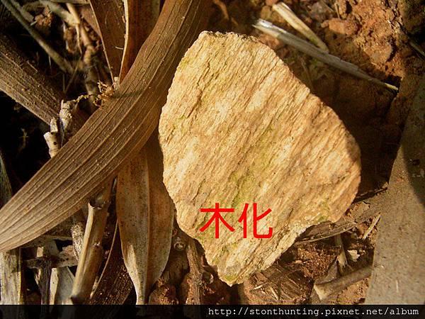 五股木化G23742.jpg